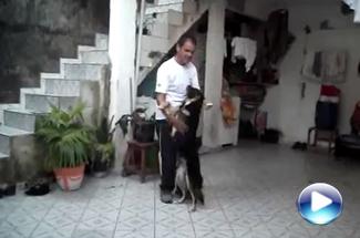Show Dog com Anita