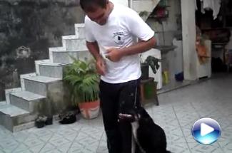 Show Dog com Anita II