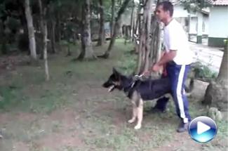 Trabalhos Adestramento II